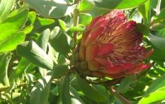 Blüte-3-web